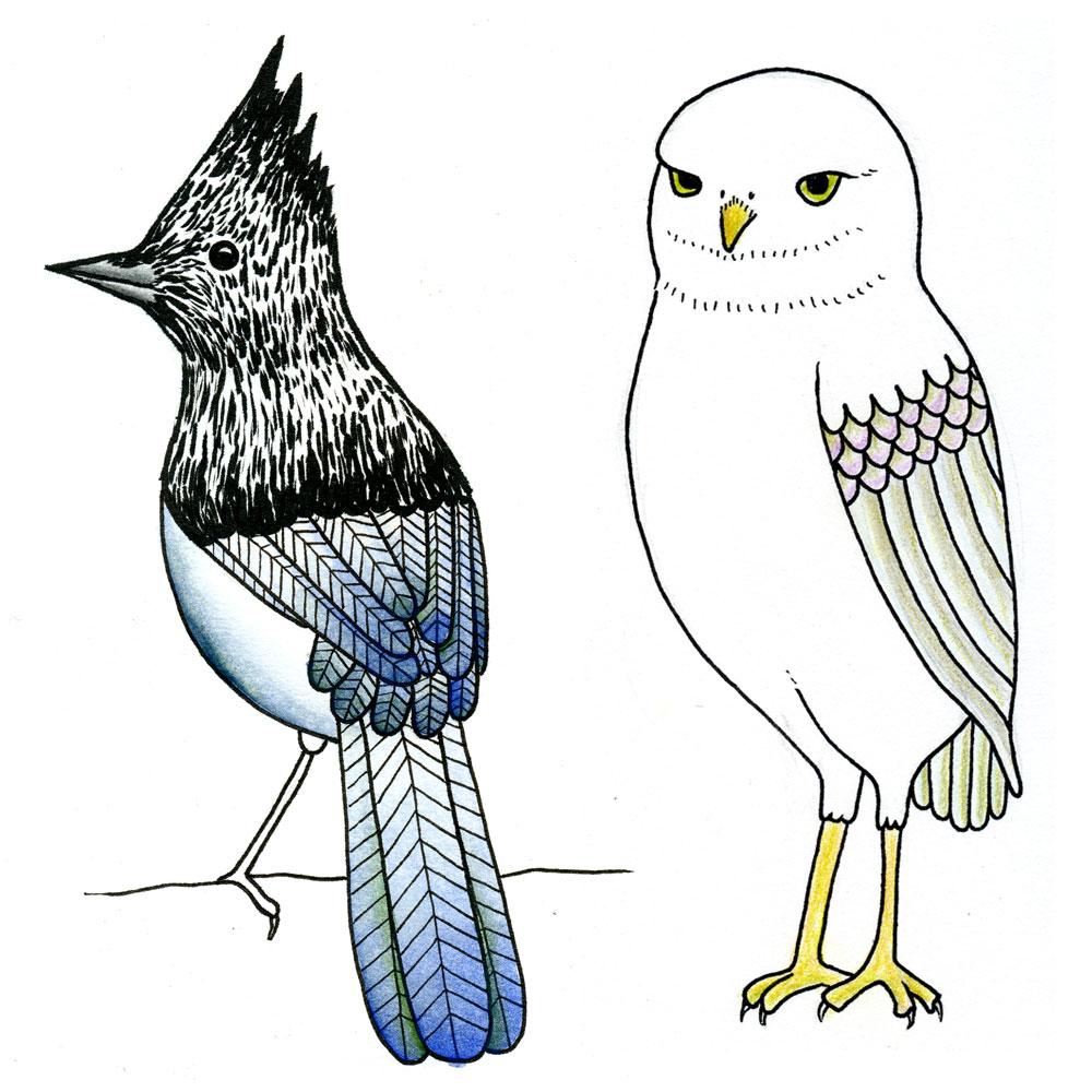 Birds-IG