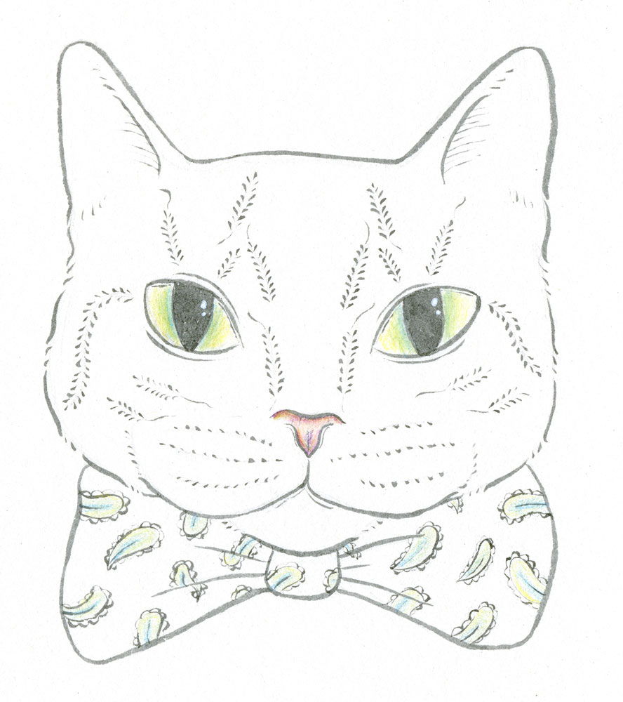 Bowtie-Cat