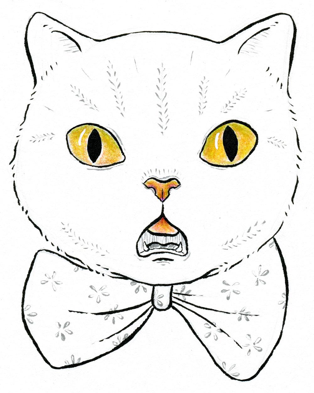Suprised-cat