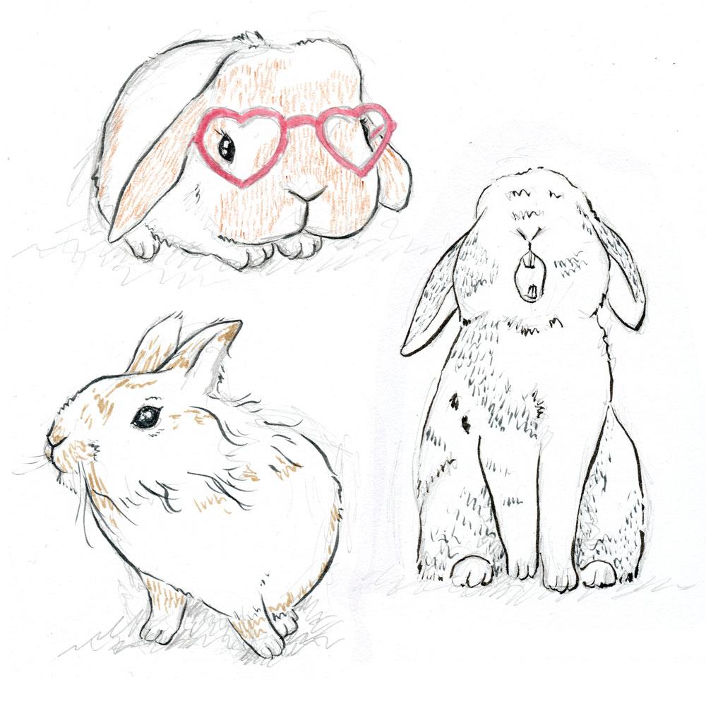 29-bunny-studies