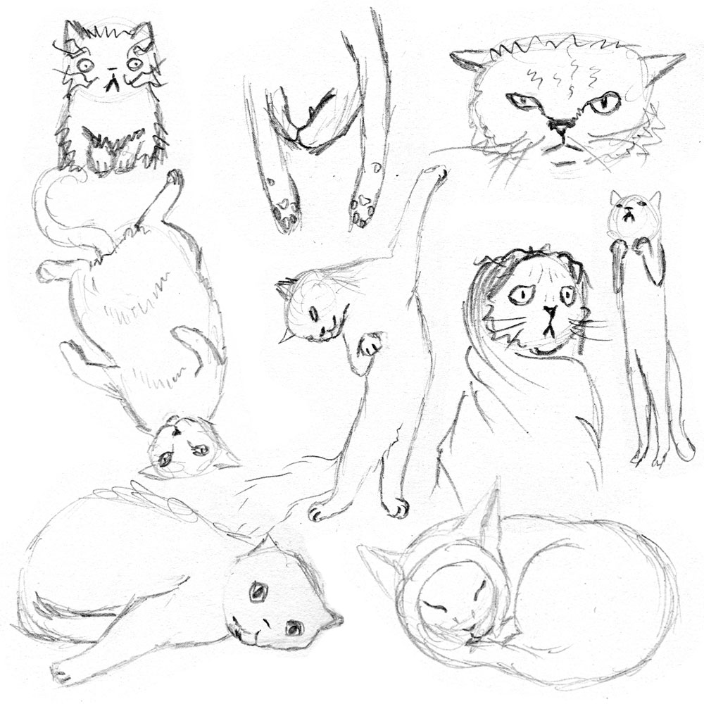 Cat-Studies-IG
