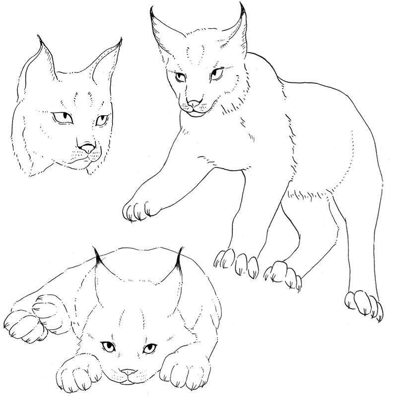 18-lynx-studies
